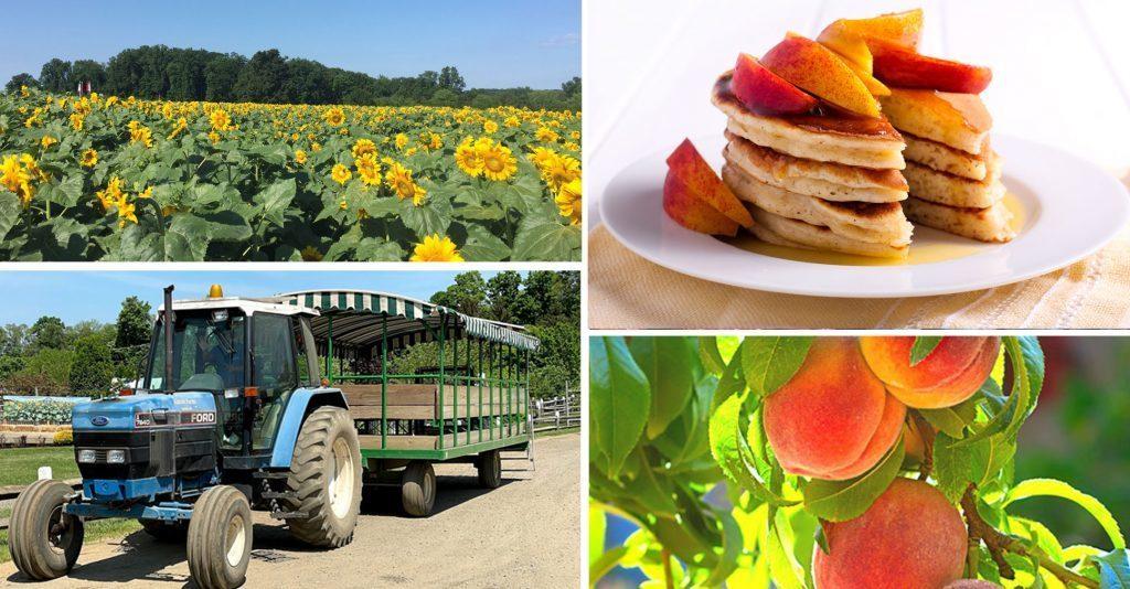 Farm to Table Peach Pancake Breakfast at Alstede Farms