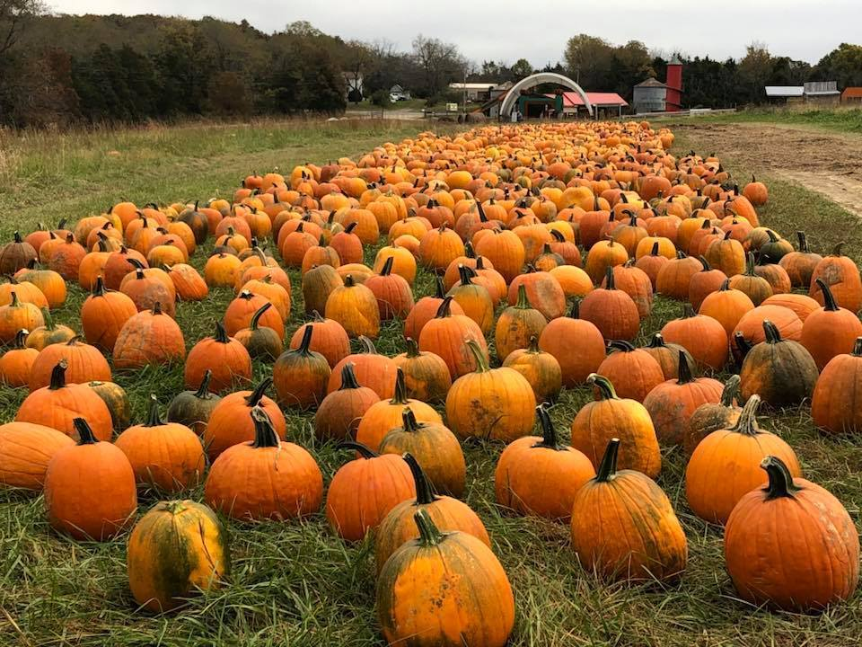 Opening Weekend at Pete's Pumpkin Patch
