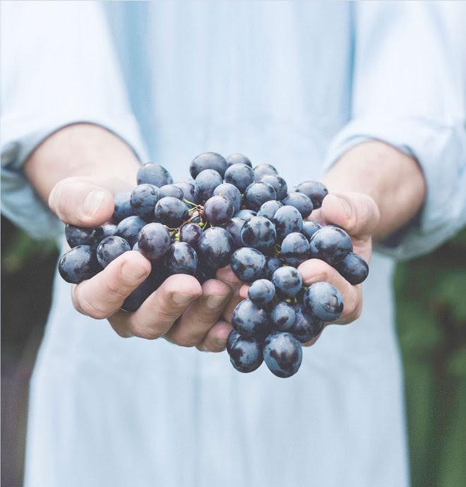 October Harvest Celebration @ Freedom Run Winery