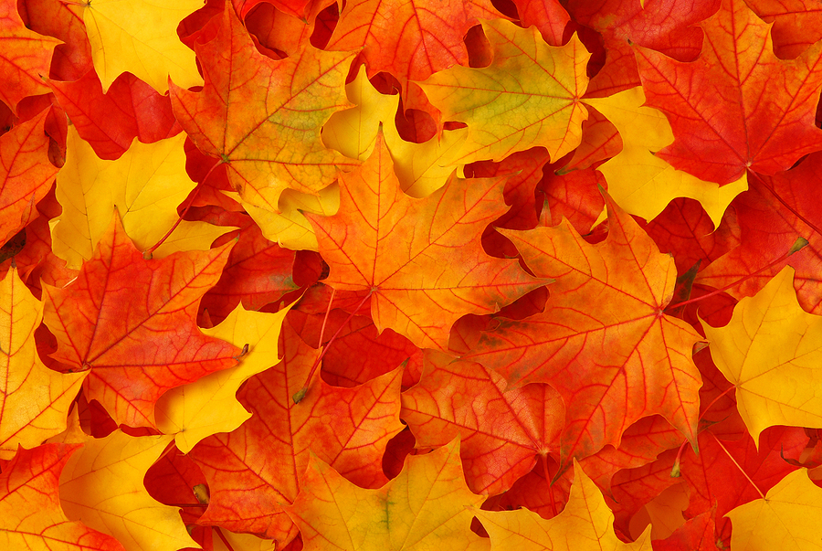 Greenburgh Nature Center fall festival